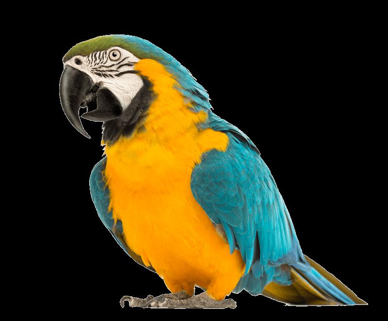 polygon parrots. afspraak